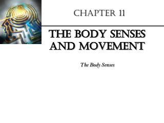 body senses