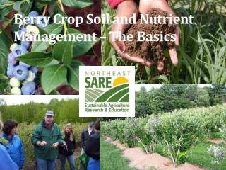 Berry Crop Soil and Nutrient Management – The Basics