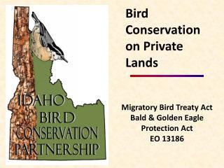 Migratory Bird Treaty Act Bald & Golden Eagle Protection Act EO 13186