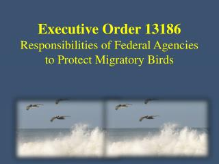 Executive Order 13186 Responsibilities of Federal Agencies to Protect Migratory Birds