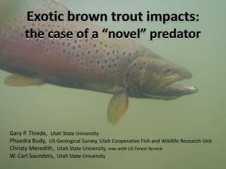 "Exotic brown trout impacts :  the case of a ""novel"" predator"