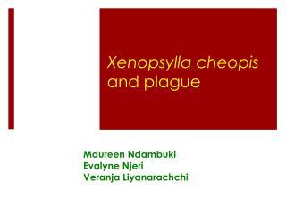 Xenopsylla cheopis and plague