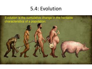 5.4: Evolution