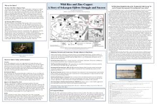 Wild Rice and Zinc-Copper: A Story of Sokaogon Ojibwe Struggle and Success Alyssa Bosold , Gettysburg College,