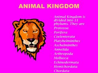 animal kingdom