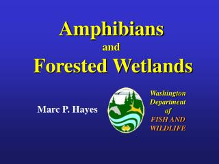 amphibians and  forested wetlands