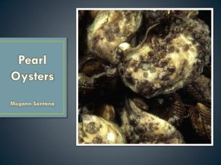 Pearl Oysters Megann Santana