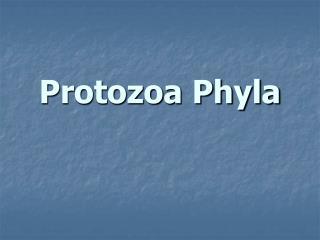 protozoa phyla