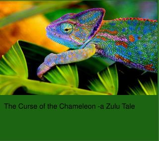 The Curse of the Chameleon -a Zulu Tale