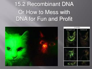 15.2 Recombinant DNA Or How to Mess with DNA for Fun and  Profit