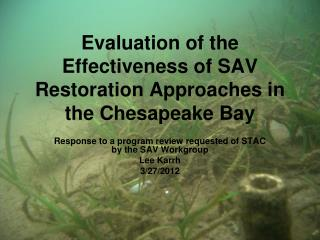 Evaluation of the Effectiveness of SAV Restoration Approaches in the Chesapeake Bay