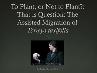 To Plant, or Not to Plant?: That is Question: The Assisted Migration of  Torreya taxifolia
