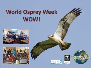 World Osprey Week WOW!