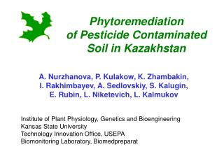 phytoremediation  of pesticide contaminated soil in kazakhstan