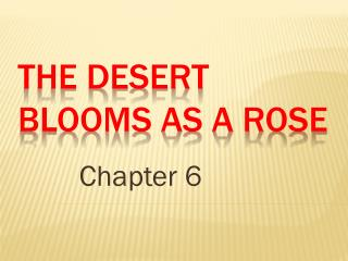 The Desert Blooms as a Rose