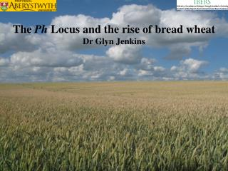 The  Ph  Locus and the rise of bread wheat Dr Glyn Jenkins