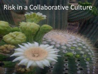 Risk in a Collaborative Culture