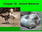 chapter 35 : animal behavior