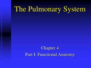 the pulmonary system