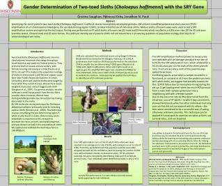 Gender Determination of Two-toed Sloths ( Choloepus hoffmanni ) with the SRY  Gene