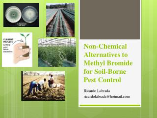 Non-Chemical Alternatives to Methyl Bromide for Soil-Borne Pest Control