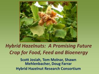 Hybrid Hazelnuts:  A Promising Future Crop for Food, Feed and Bioenergy