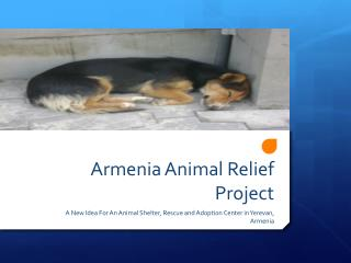 Armenia Animal Relief Project