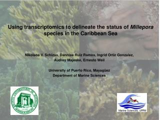 Using transcriptomics to delineate the status of  Millepora  species in the Caribbean Sea