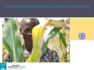 FAO and MAFCRD Activities  on MLND  in South Sudan