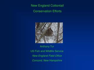 New  England  Cottontail Conservation Efforts
