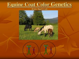 equine coat color genetics jenny ingwerson