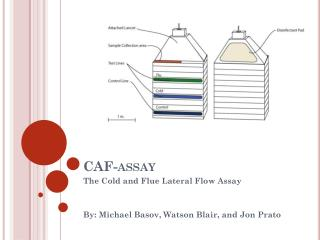 CAF-assay
