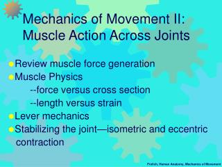 mechanics of movement ii:  muscle action across joints
