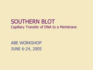 southern blot capillary transfer of dna to a membrane