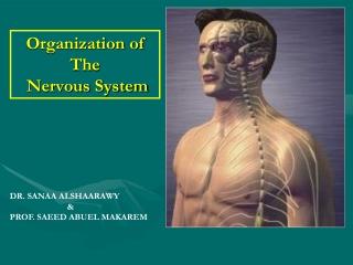 Nervous System I