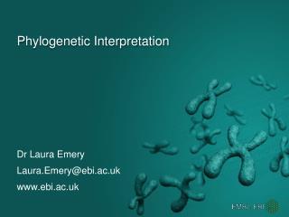 Phylogenetic Interpretation