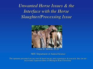 Unwanted Horse Issues & the Interface with the Horse Slaughter/Processing Issue