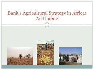 Bank's Agricultural Strategy in Africa:  An Update