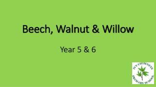 Beech, Walnut & Willow