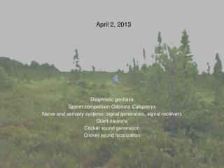 April 2, 2013