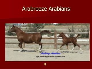 Arabreeze Arabians