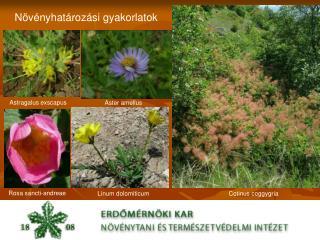 Növényhatározási gyakorlatok