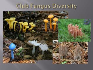 Club Fungus Diversity