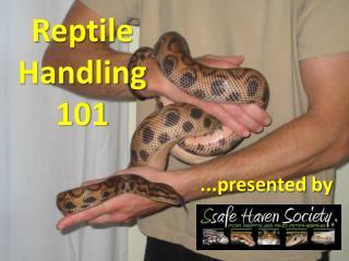 Reptile Handling 101