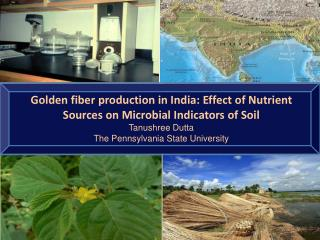 Golden fiber production in India: Effect of Nutrient Sources on Microbial Indicators of Soil Tanushree Dutta The Pennsy