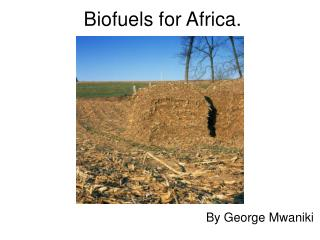 Biofuels for Africa.