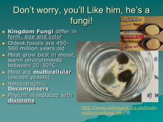 Don't worry, you'll Like him, he's a fungi!
