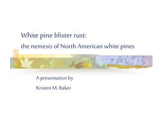 White pine blister rust: the nemesis of North American white pines