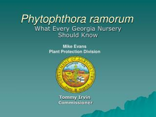 Tratamiento phytophthora