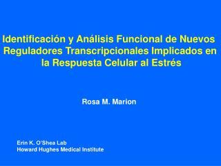 Identificación y Análisis Funcional de Nuevos  Reguladores Transcripcionales Implicados en  la Respuesta Celular al Est